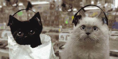 Коты-диджеи : Прикольные анимашки