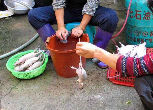 Крысы : Этим тебя накормят в китайском ресторане