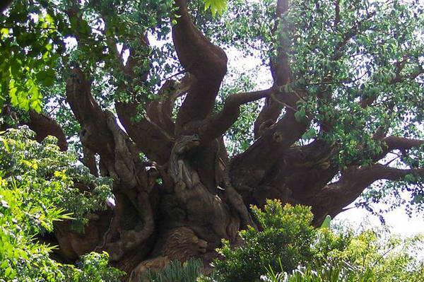 Звериное дерево