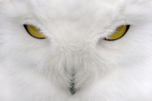 Большие и красивые фото животных, птиц...