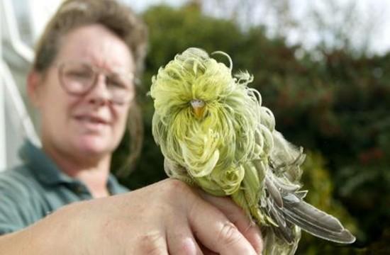 Прикольный попугайчик