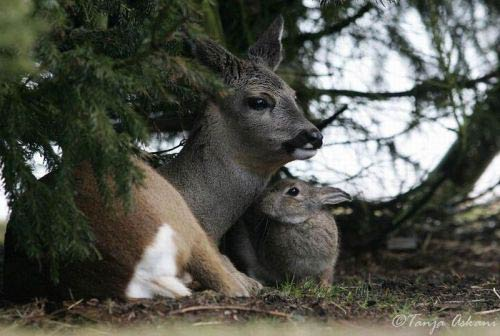 Дружба зайчика и олененка