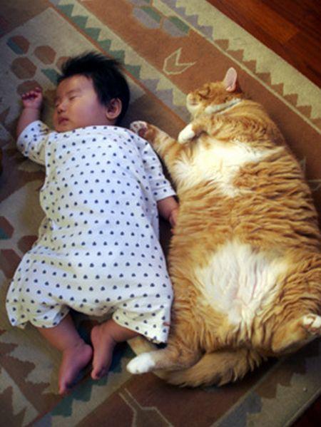 Сладкий сон : Кид и Кэт