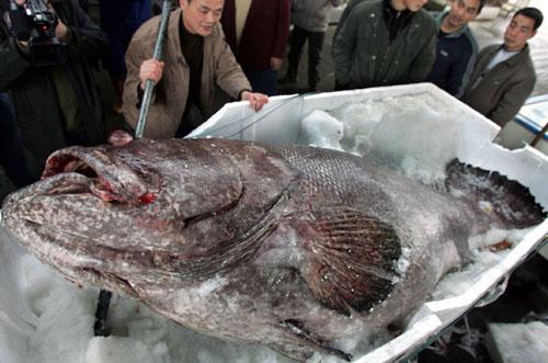 Гигантская рыбина