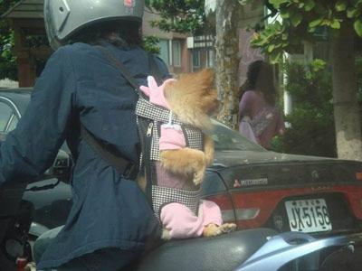 Как песика возили