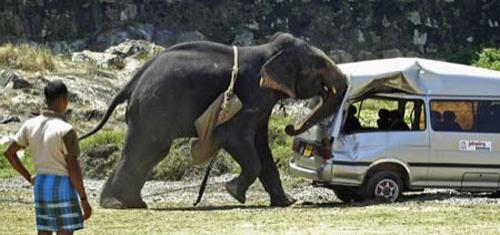 Разъяренный слон разгромил микроавтобус