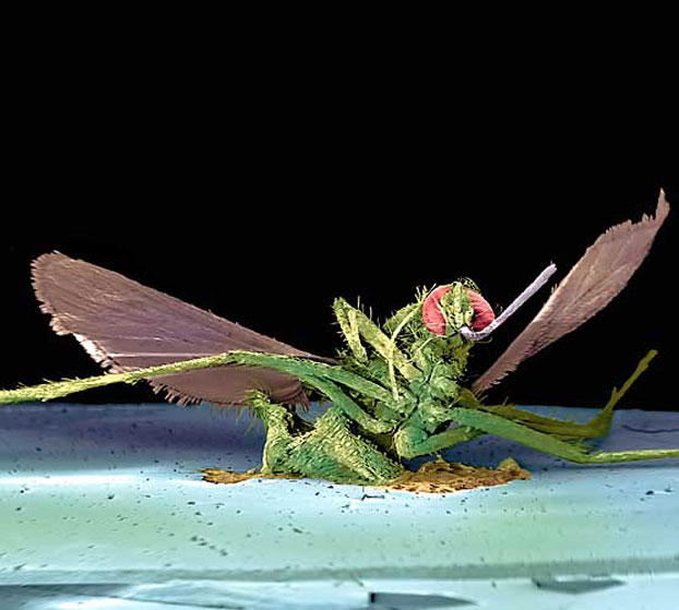 Убитые насекомые