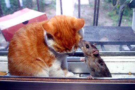 Нежная дружба мышки и кошки