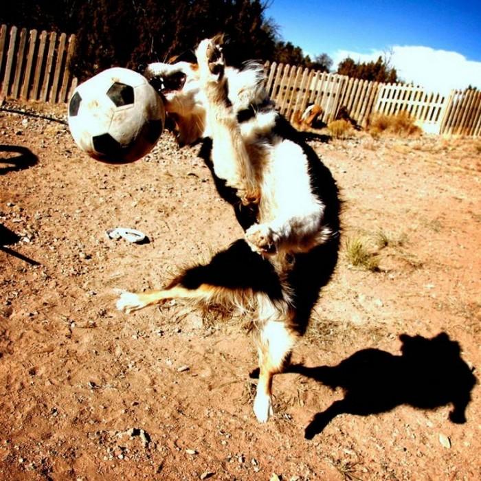 Фотоприколы кучей