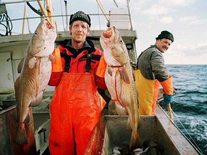 на чем ловят рыбу судно