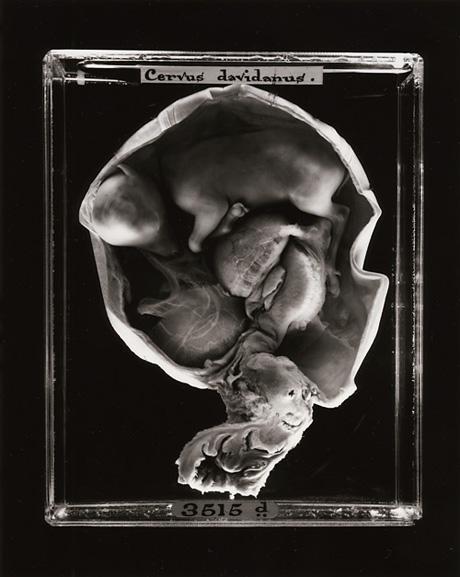 Эмбрионы животных