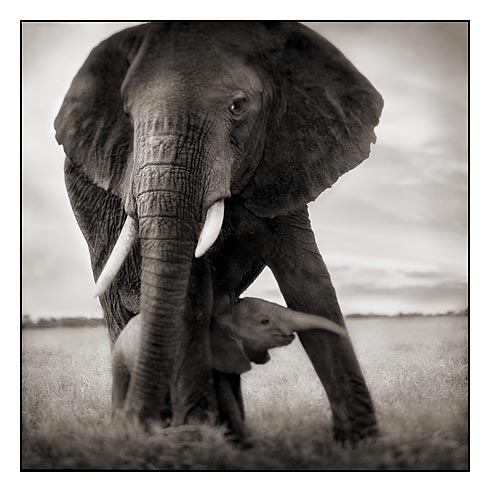 Великолепные фото животных