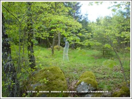 Привидение в лесу