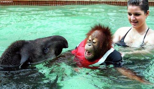 Животные в воде