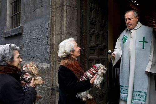День святого Антония