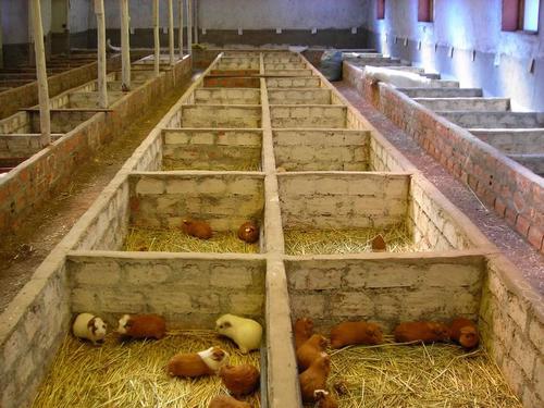 Ферма для домашних условиях