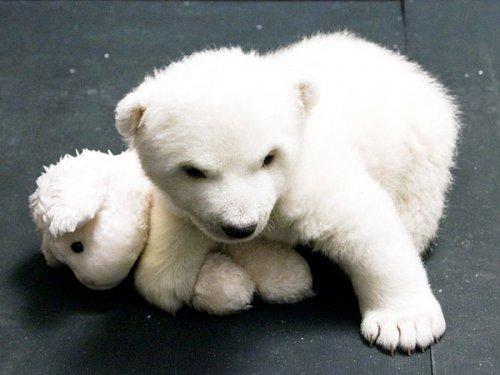 Медвежонок Флок