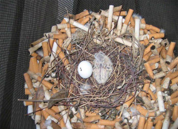 Гнездо для воробья как сделать