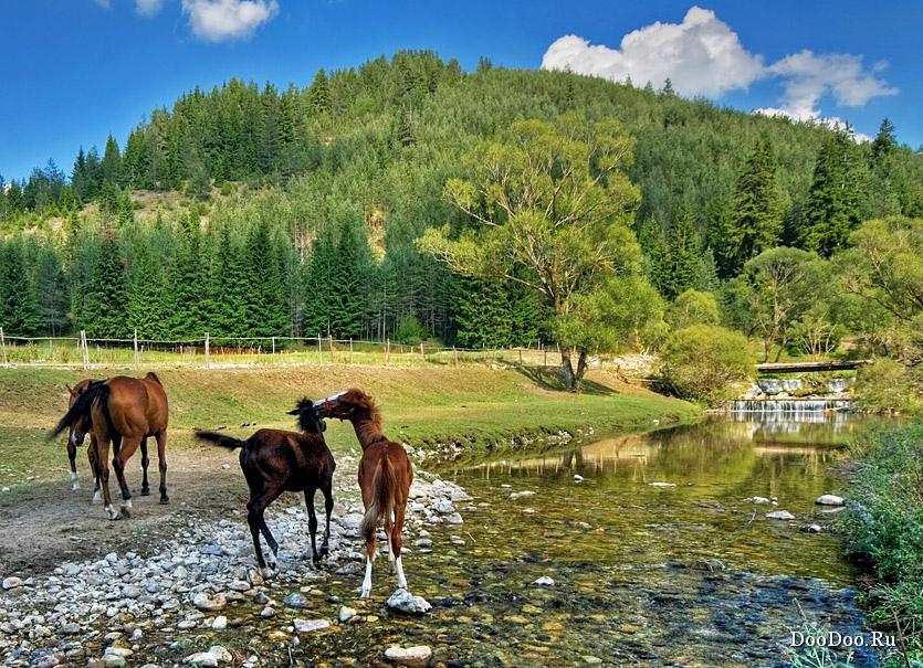 картинки с природой и лошадьми