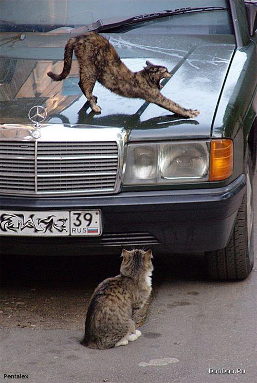 http://www.doodoo.ru/uploads/posts/2008-09/thumbs/photo-jokes-042.jpg