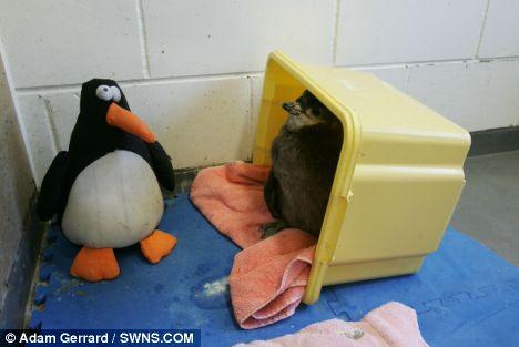 Пингвин для пингвина