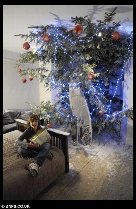 High ceiling and big christmas tree