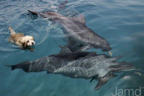 Собака-дельфин