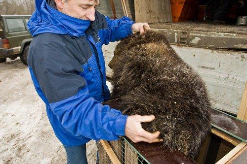 Медвежонок-детдомовец