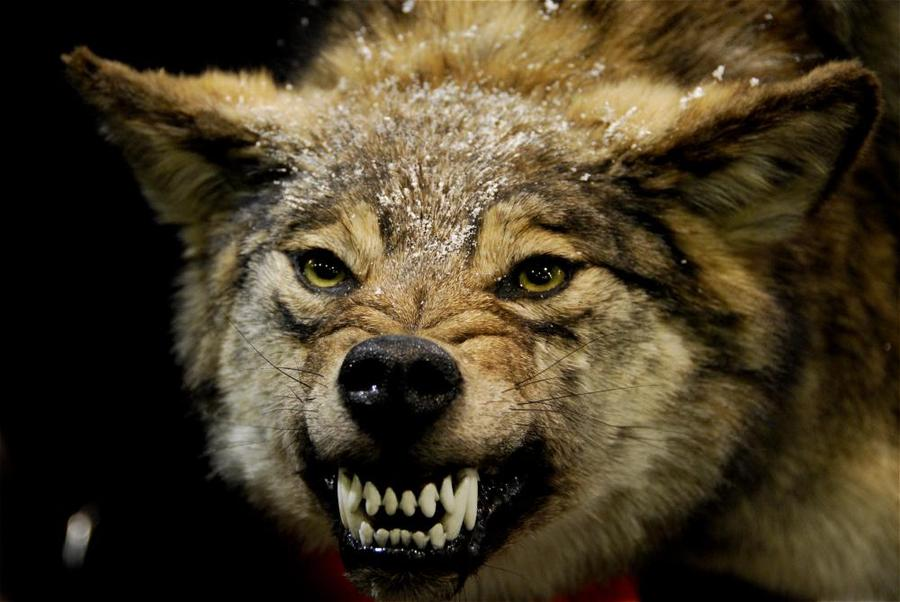 动物牙齿粘贴画