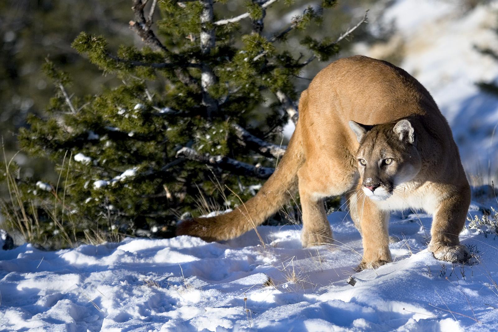[名家作品]难得的野生动物抓拍 o 高清震撼