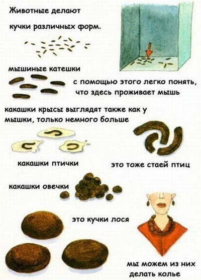 Как выглядят какашки