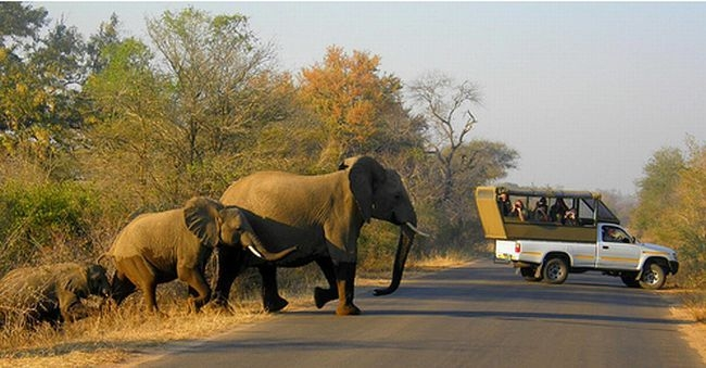 Photo: kruger national park - south africa