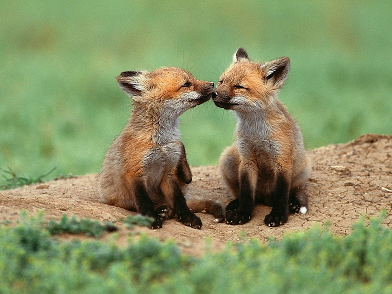 可爱的野生小动物