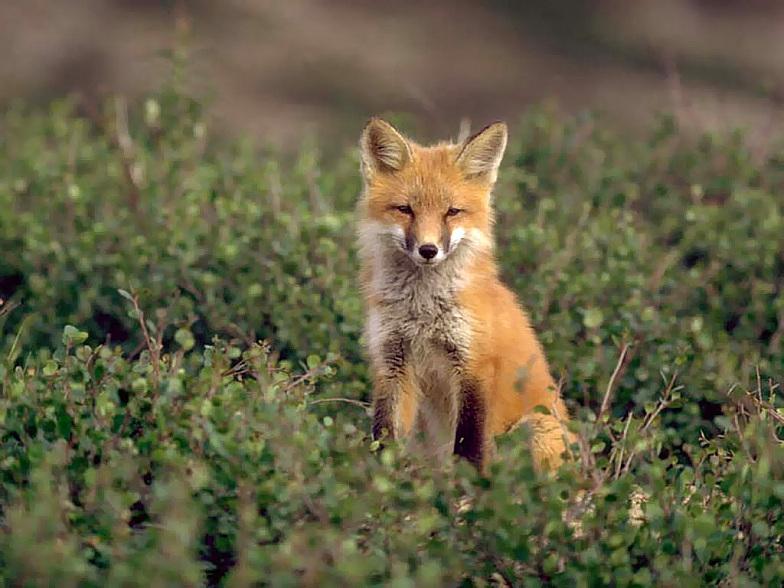 超可爱的野生小动物[50p]|『图音画坊』