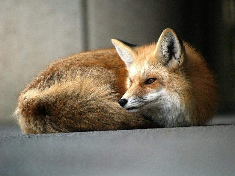 超可爱的野生小动物 o