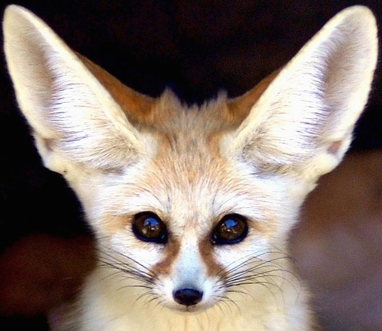 超可爱的野生小动物 o 你认得吗?