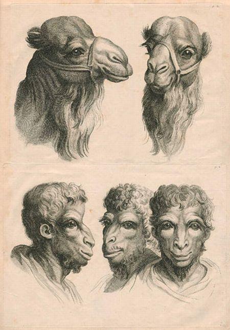 动物素描简笔画