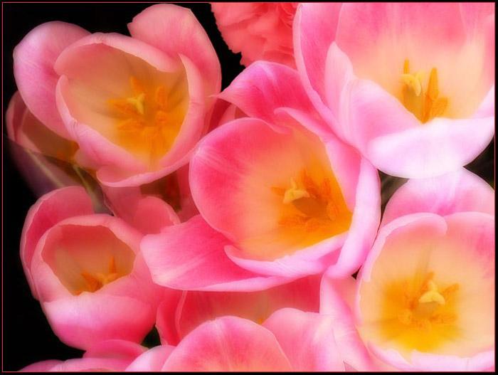 http://www.doodoo.ru/uploads/posts/2009-08/flowers-43.jpg