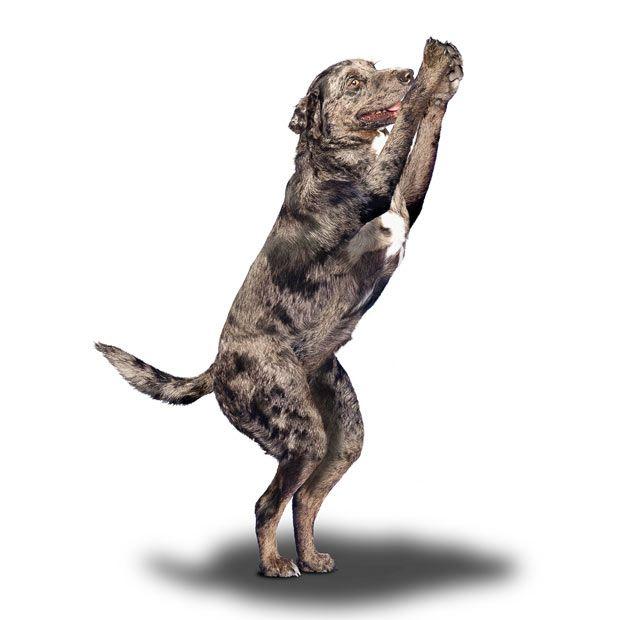 Йога для собаки