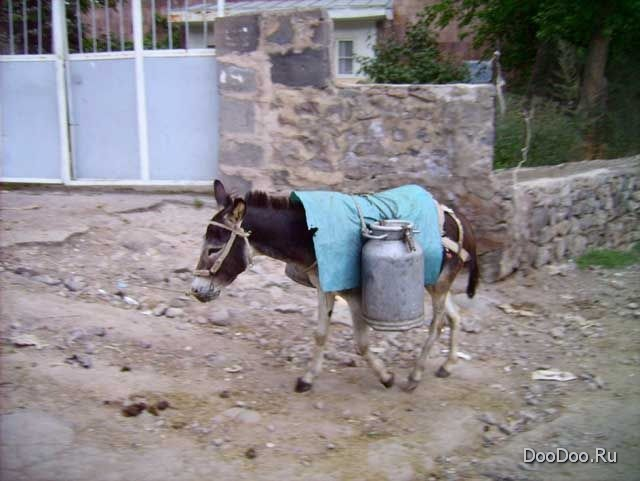 http://www.doodoo.ru/uploads/posts/2009-11/funny-pic-003.jpg