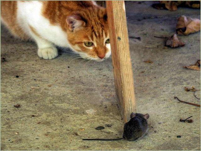 http://www.doodoo.ru/uploads/posts/2009-11/photo-for-fun-042.jpg
