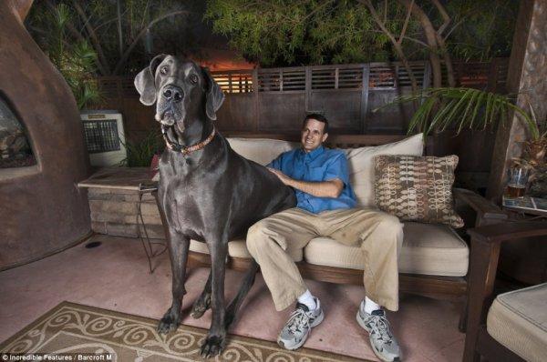 Ну очень большая собака