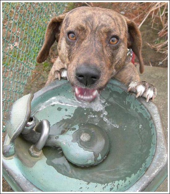Кошки, собаки и вода