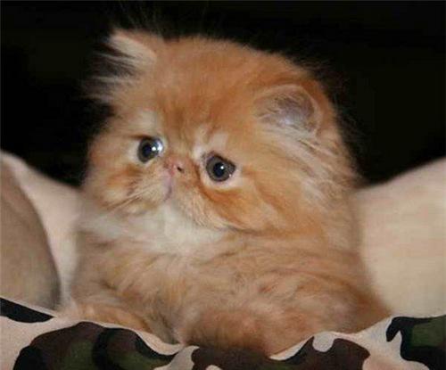 Взросление маленького, рыженького котенка в фотографиях.