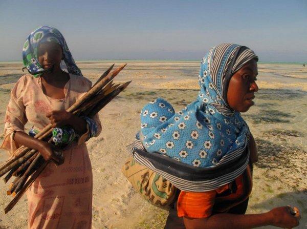 Водоросли из Занзибара