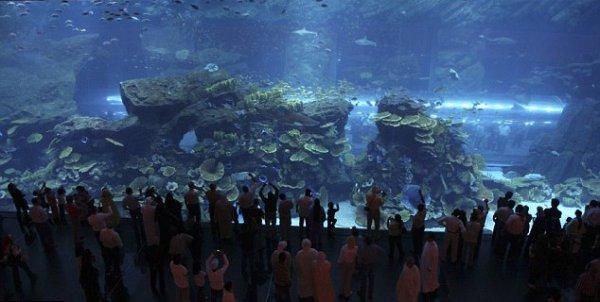 Протечка в гигантском авквариуме