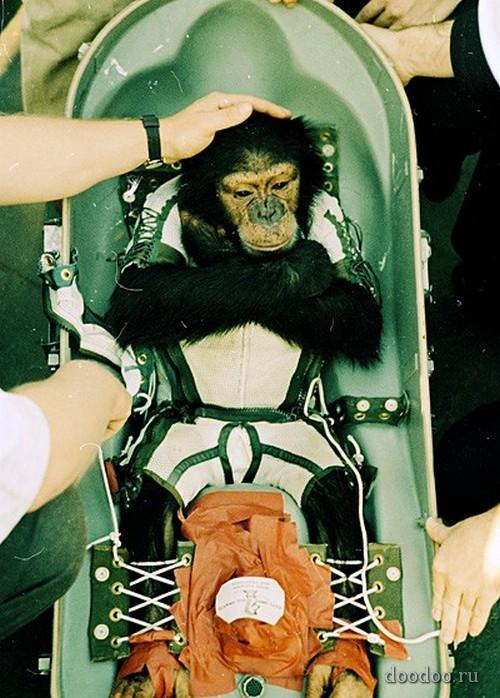 Животные в космосе