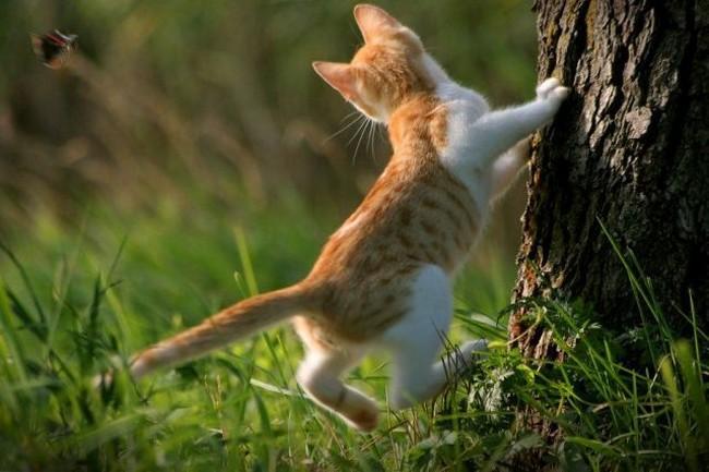Кошка ловит бабочек рисунок