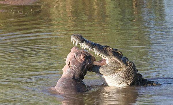 крокодил напал на лодку