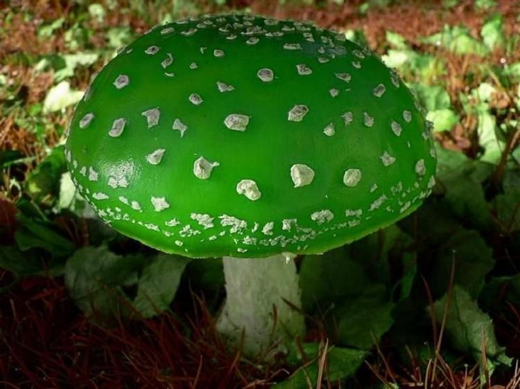 Синие под грибы рецепт фото